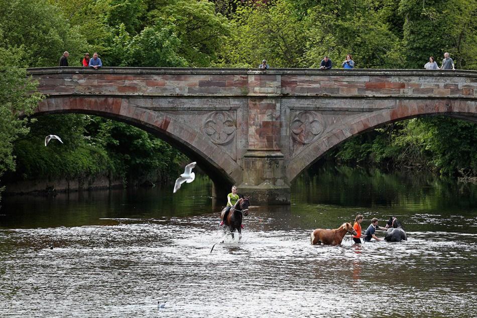 От мала до велика в воде на ярмарке Appleby Horse Fair