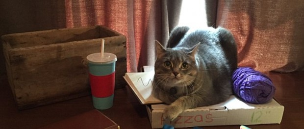 Реальное воплощение котов-стикеров из Фейсбук