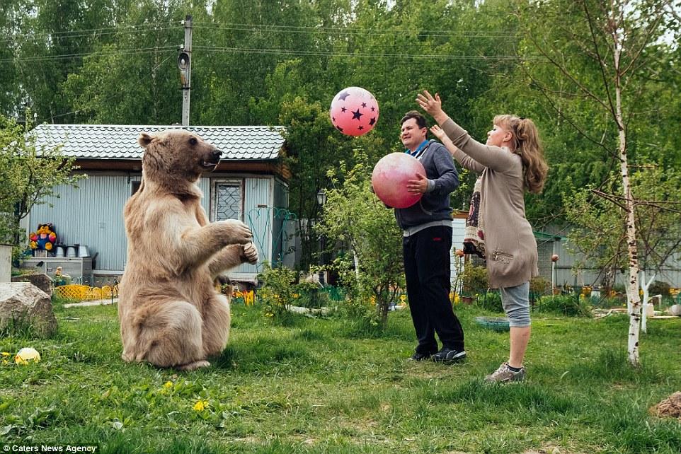 игры медведя сына