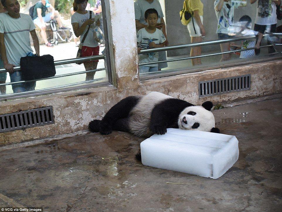 Ice panda