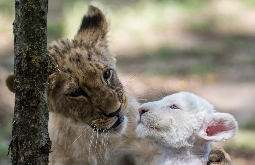 малолетние питомцы Маганского зоопарка