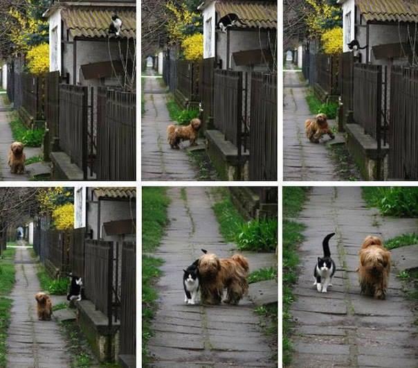 История одной дружбы в фотографиях
