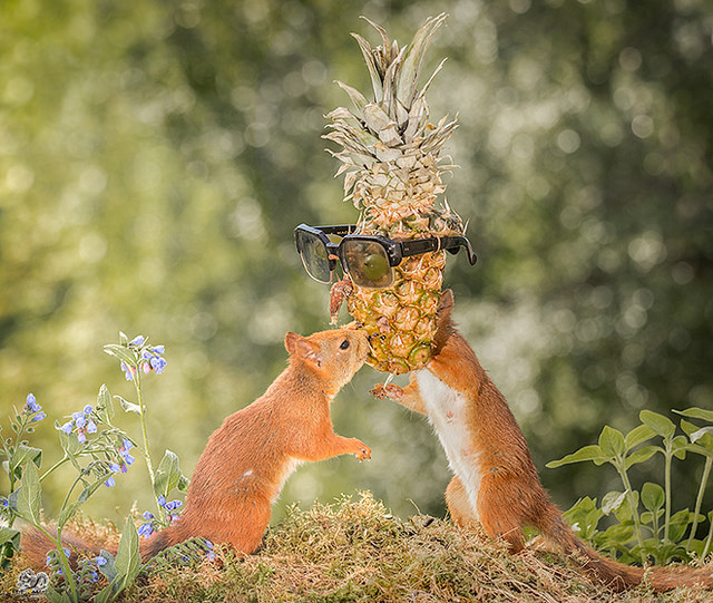 позитивная белка от фотографа Гирта Веггена