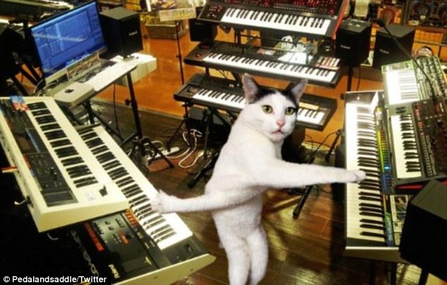 забавные мемы на кота твистера