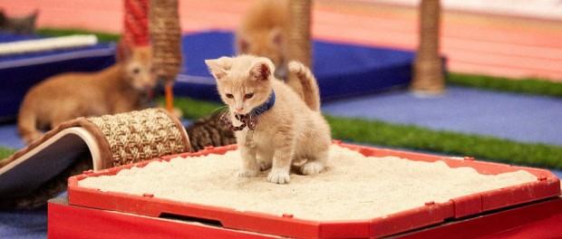 Кошачья олимпиада порадует всех