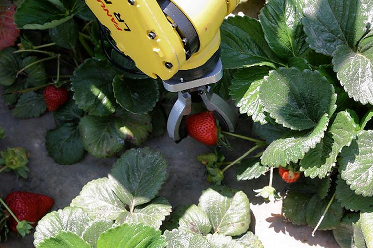 Голод одолеют роботы-фермеры