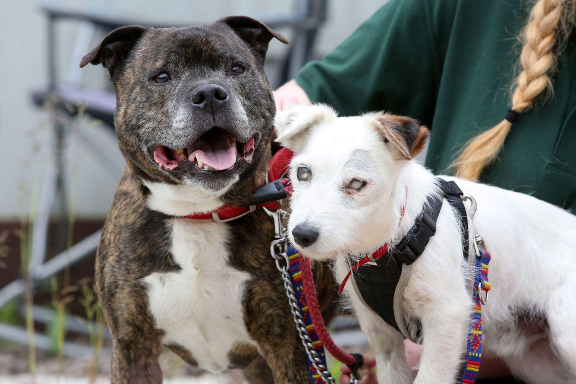 слепой пес и его друг поводырь