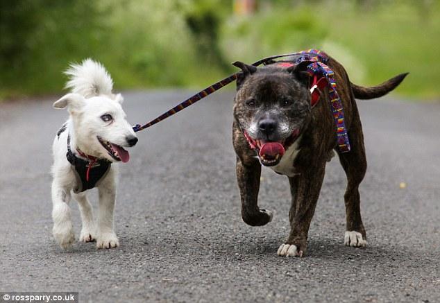 Позитивная дружба собак
