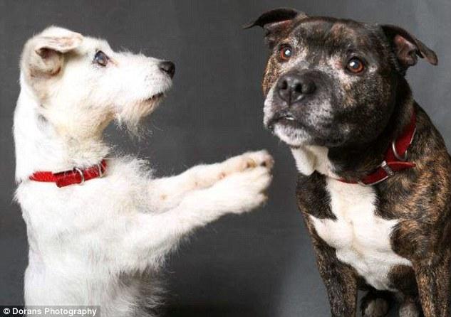 Настоящая собачья дружба