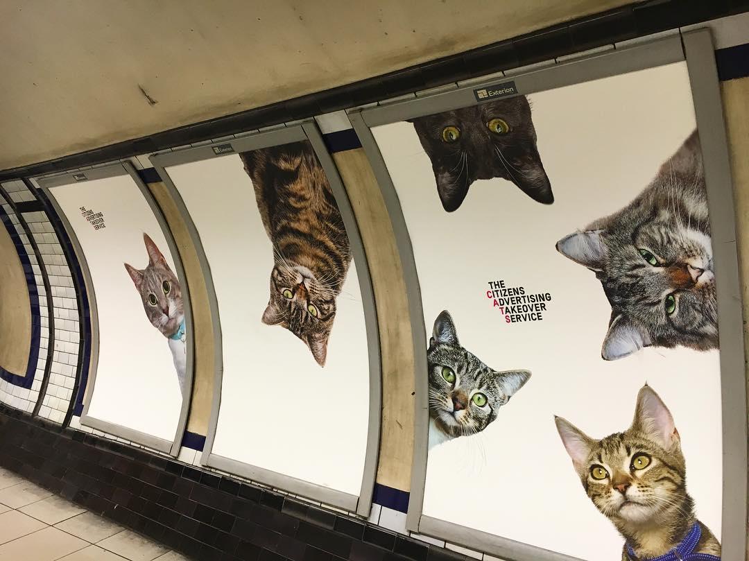 коты заполонили британскую подземку
