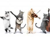 music-cats-1024x635
