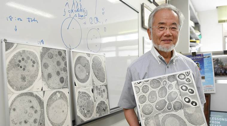 Japanese scientist Yoshinori Ohsumi