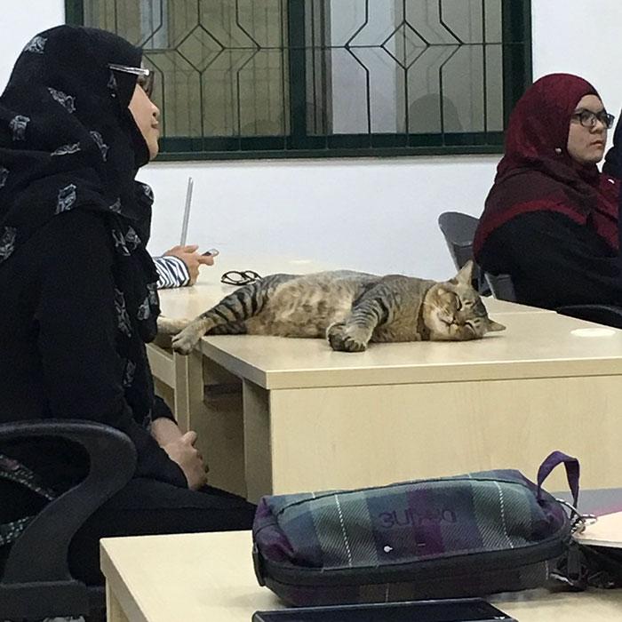 study-cat2