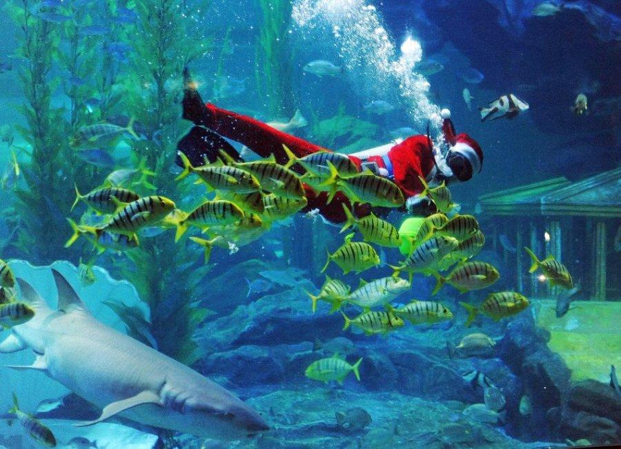Обитатели океанариума Куала-Лумпур приобщились к рождественским праздникам