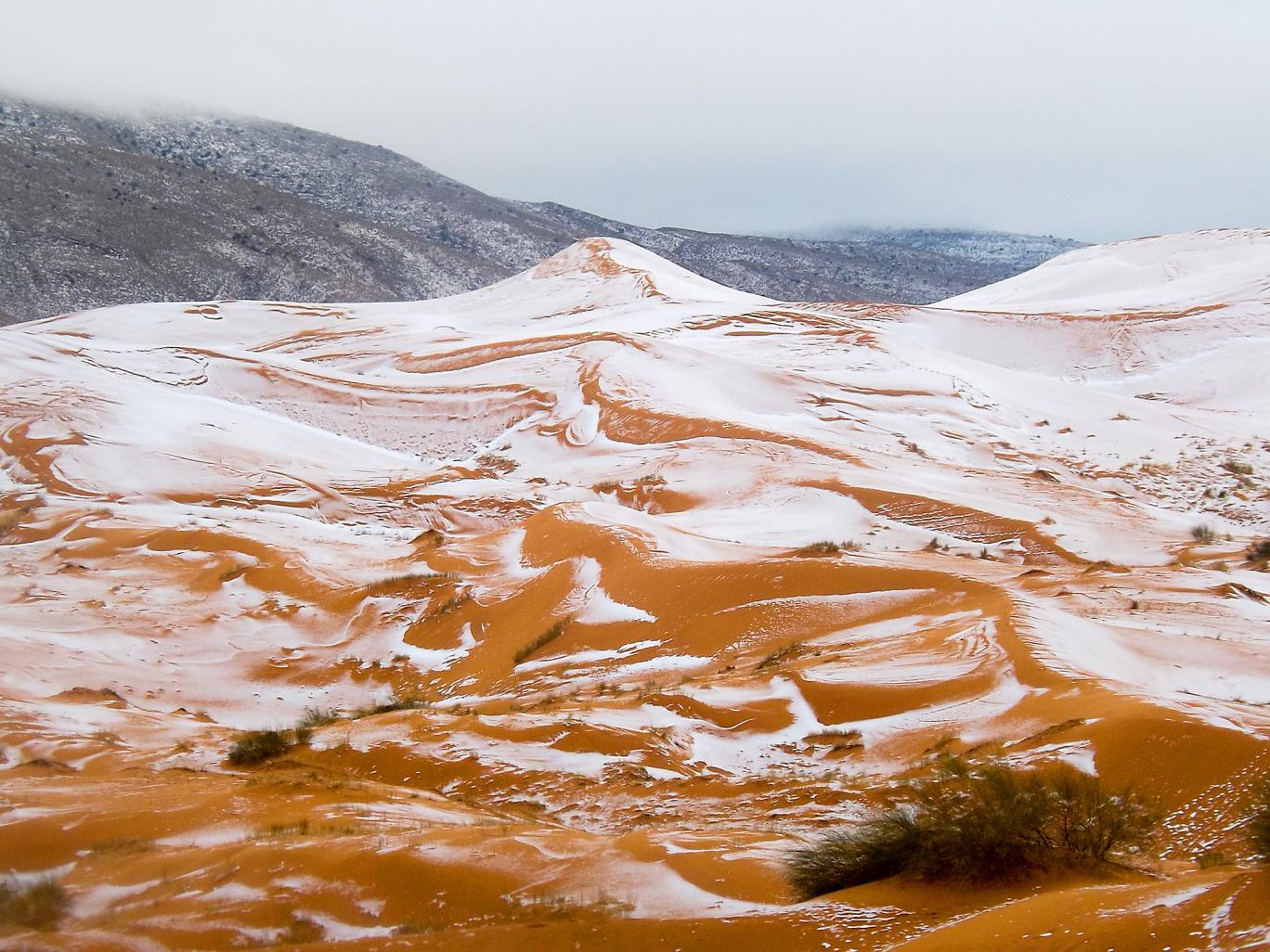 sahara-snow-1