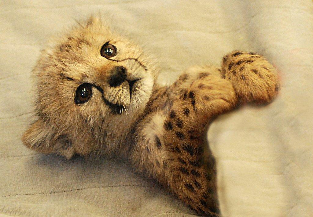 Минишное фото из зоопарка в Цинциннати