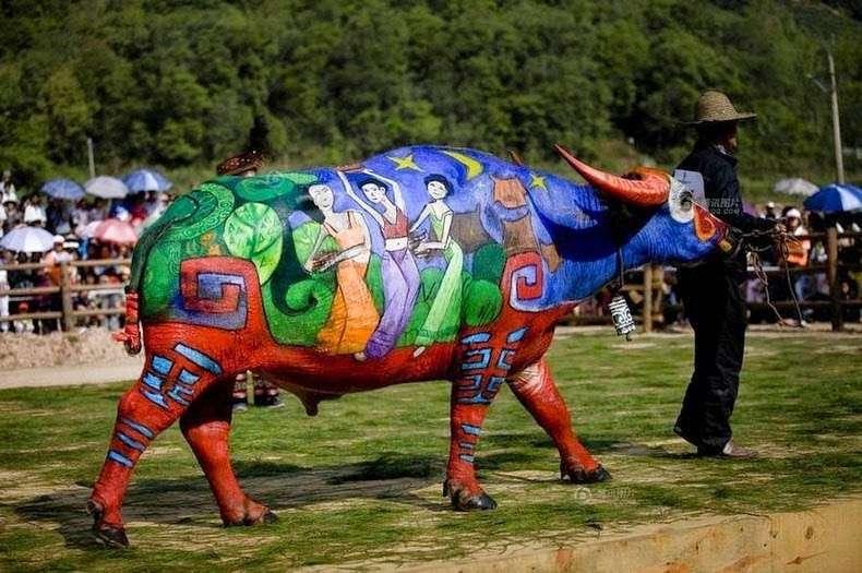 В Азии и быки приобщаются к боди-арту
