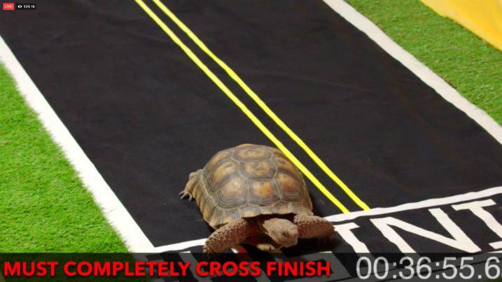 быстроногая черепаха
