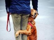 пес обнимашка