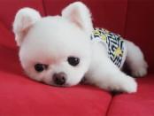 puppi-dog01