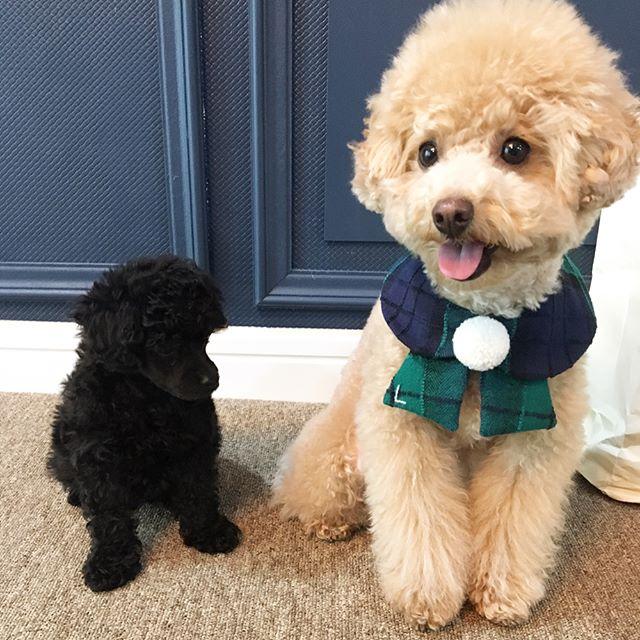 puppi-dog04