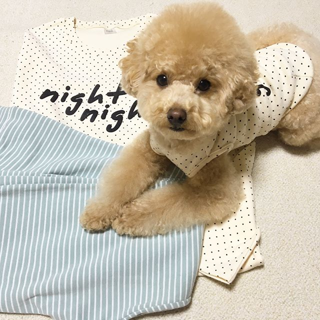 puppi-dog05