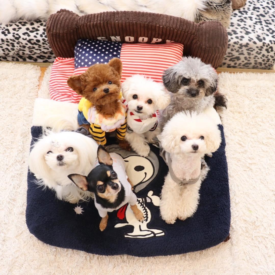 puppi-dog08