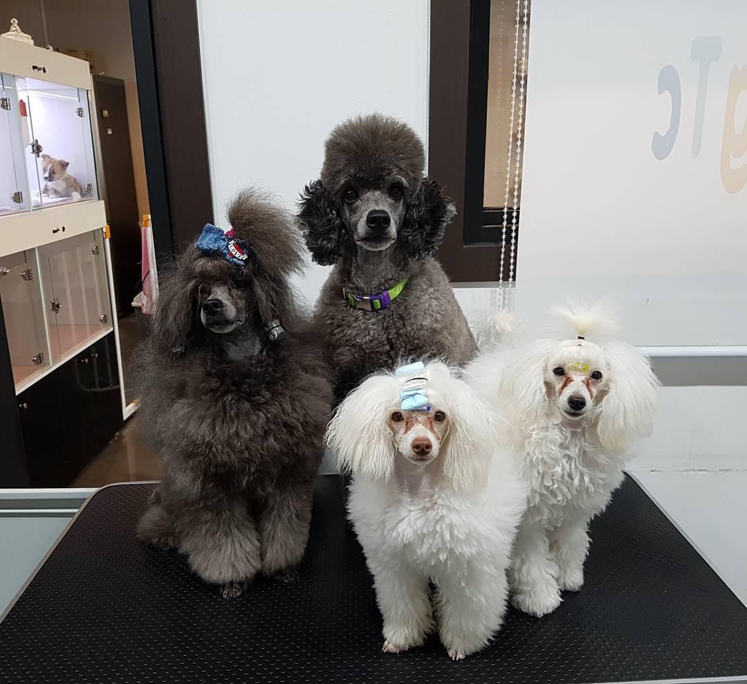 puppi-dog09