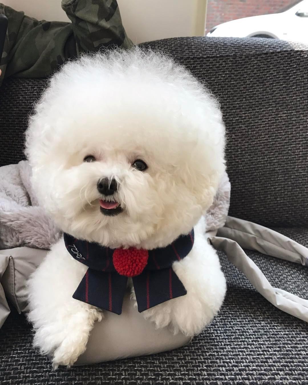 puppi-dog11