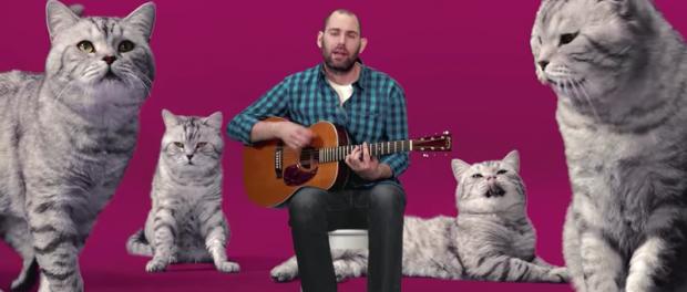 Забавная песня о котах от Слепакова