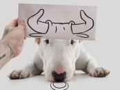 Creative Dog0