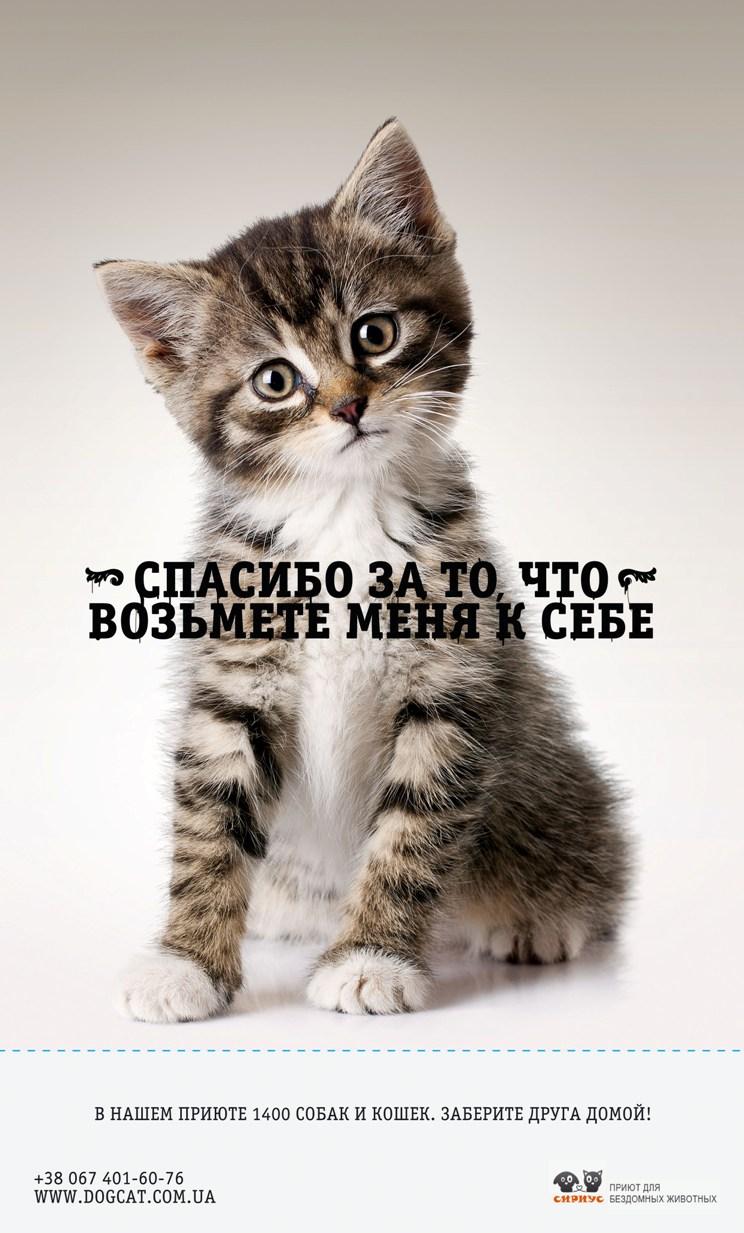 украинский подход к лозунгуам взять в семью животное