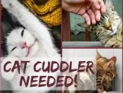cat_cuddlerneeded2