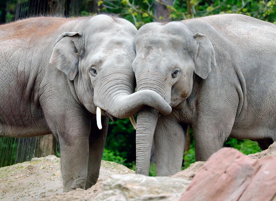 Большая и чистая любовь в зоопарке Гейдельберга