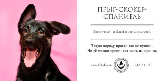 оригинальная реклама приюта для животных