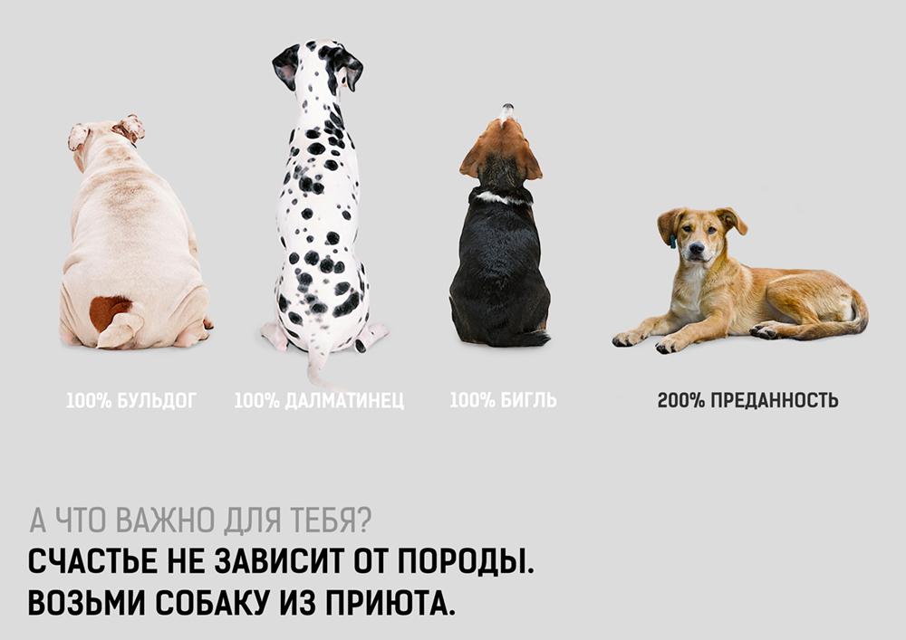 reklama-zhivotnye