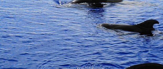 Два десятка дельфинов спасли на Шри-Ланке