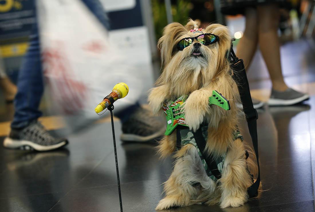 Gypsy Dog из Таиланда
