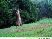 epic fight between two bucks in Tennessee