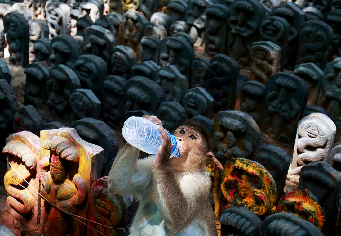 Труд сделал из обезьяны человека - жара также может поспособствовать эволюции