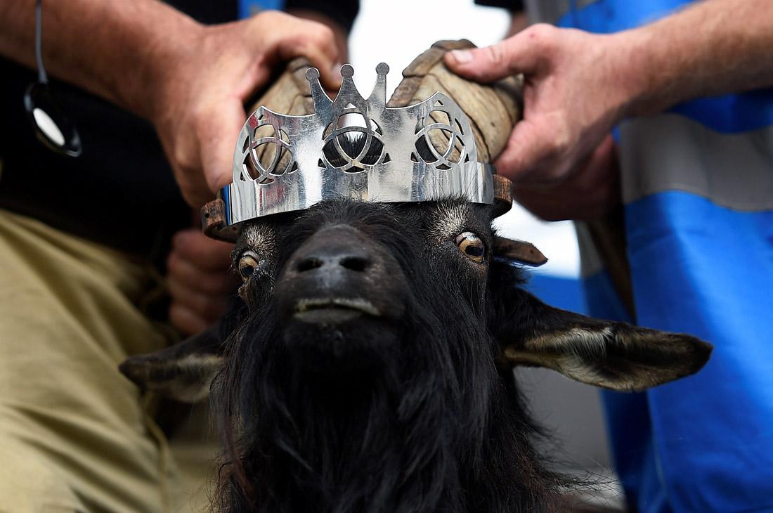 Королева праздника Puck Fair