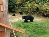 Канадец вежливо послал медведей