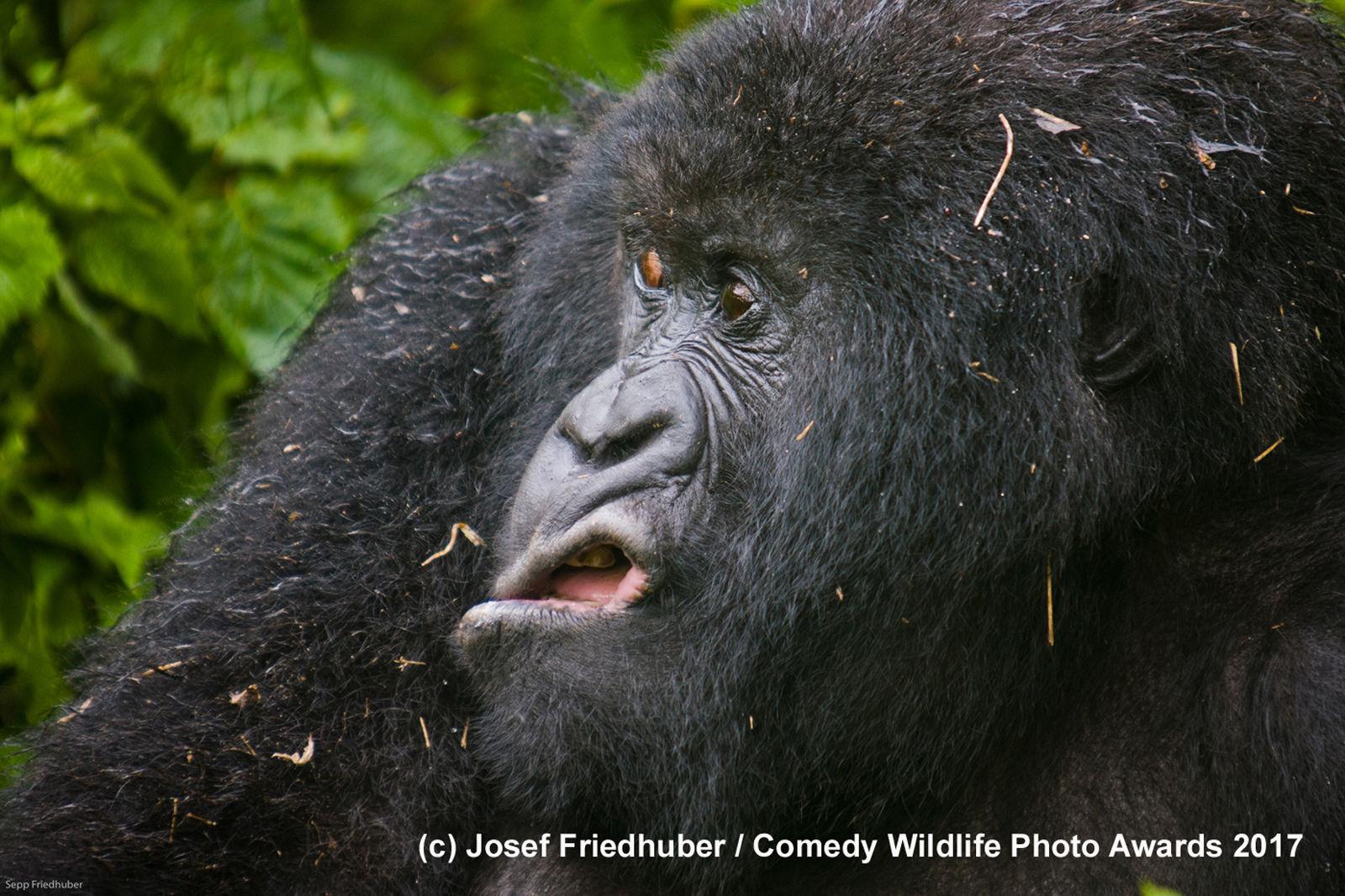 Comedy Wildlife 2017