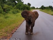 Grumpy little elephant