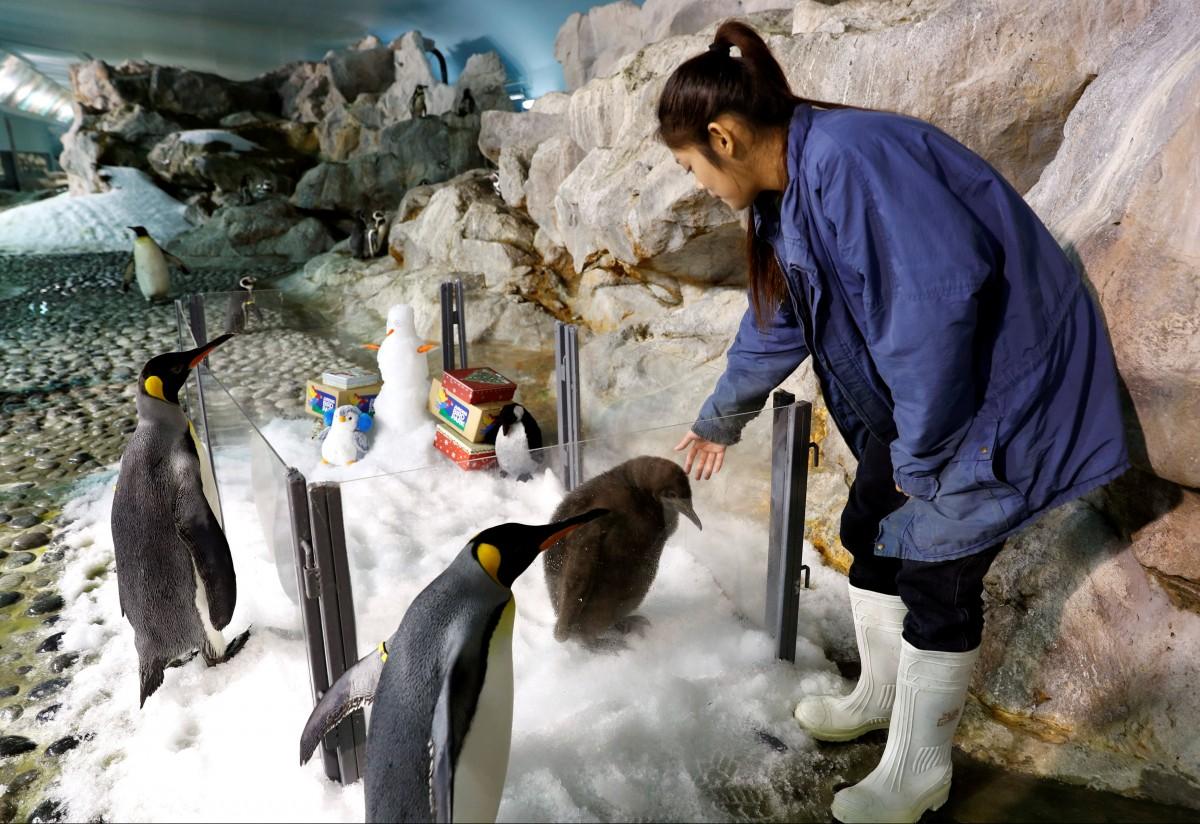 пингвин06
