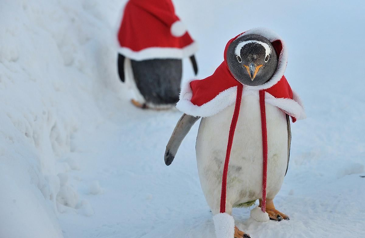 Так вот он какой Санта на самом деле! Photo by Tao Zhang/Getty Images)