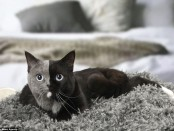 Two-faced cat01