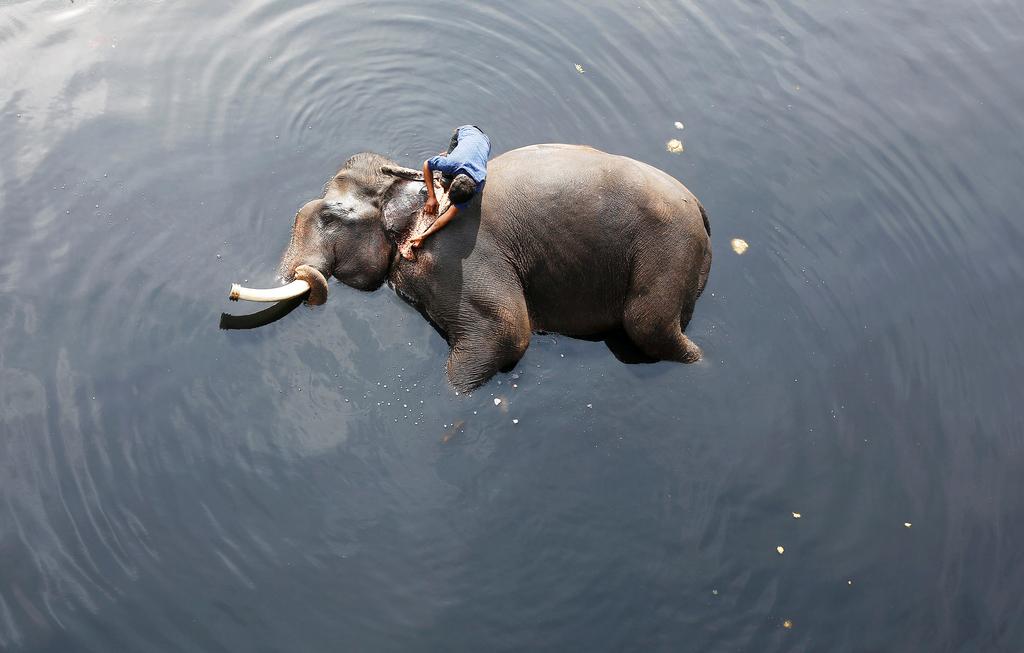 Мытье слона в Индии