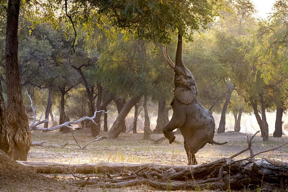 Забавная йога для слонов