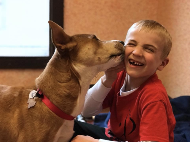 boy has helped over 1,000 dogs